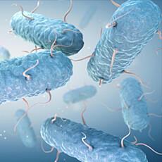 Anti Microbial Film